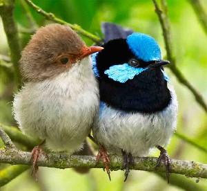 طالع بینی پرنده ها پرنده ماه تولد شما چیست و آموزش طالع بینی پرندگان چگونه است